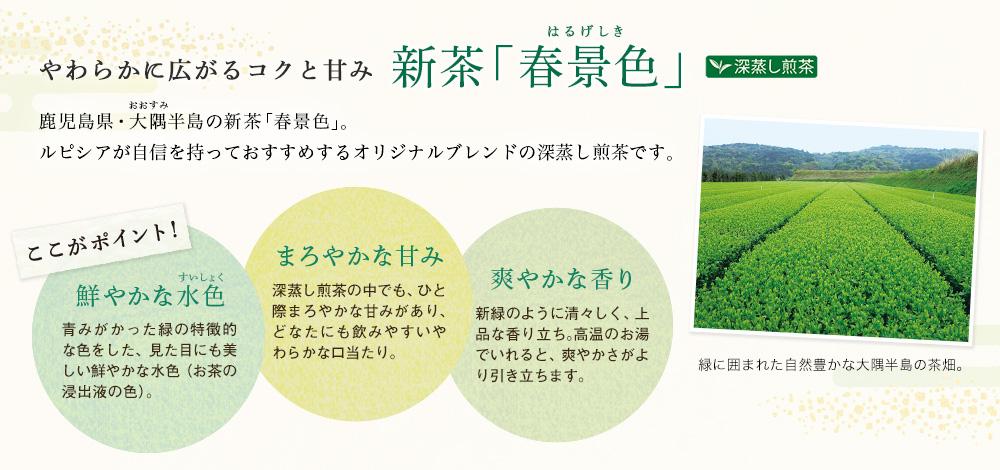 新茶「春景色」