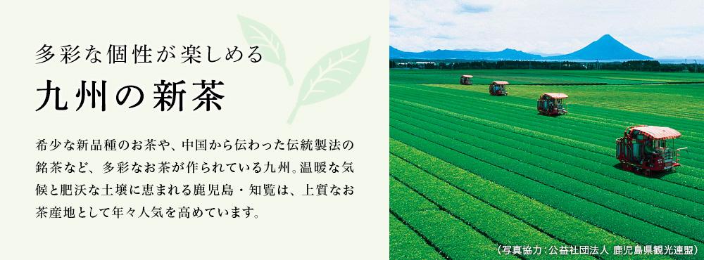 九州の新茶