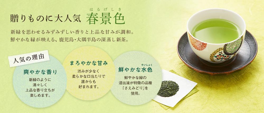 大隅新茶 さえみどり 「春景色」 2021