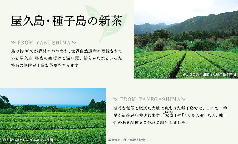 屋久島・種子島の新茶