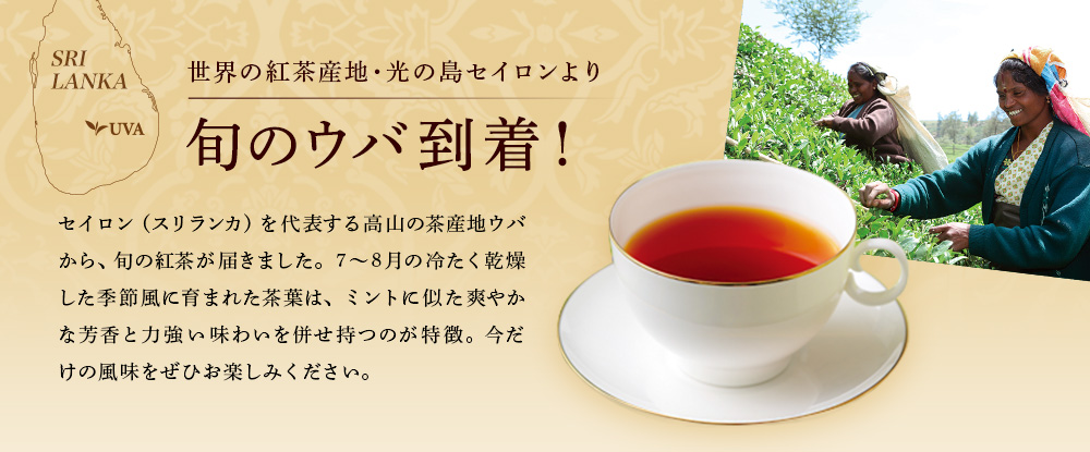世界の紅茶産地・光の島セイロンより 旬のウバ紅茶到着!