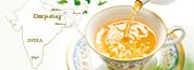 黄金に輝く旬の紅茶 ダージリン春摘み紅茶