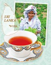 世界三大銘茶の一つ、ウバの紅茶