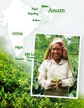 インド・アッサムから届いた春摘み紅茶
