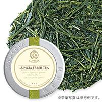 静岡新茶 202050g缶入